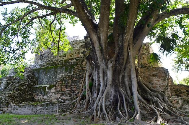 Au nord de la zone hôtelière  de Cancún, au Mexique, le  site archologique maya El  Meco est accessible en bus  ou taxi.