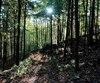 En pleine forêt, les sentiers de la Ville de Bromont demeurent tout de même faciles d'accès et peu éloignés.