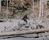 Le Bigfoot, tiré du «documentaire» de Roger Patterson et Robert Gimlin paru en 1967.
