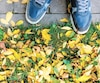 sneakers on a background of autumn asphalt