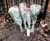 Des fleurs et un lampion ont été déposés à l'orée du boisé de l'Île-des-Soeurs où le corps de l'adolescent a été découvert.