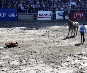 Le cowboy Scott McMahon a été éliminé par les juges lors de la compétition, car son bouvillon a été trop traîné au sol.