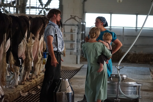 Ces Amish sont «progressistes» puisqu'ils utilisent une génératrice et une trayeuse mécanique. Leur ferme est impeccablement propre.
