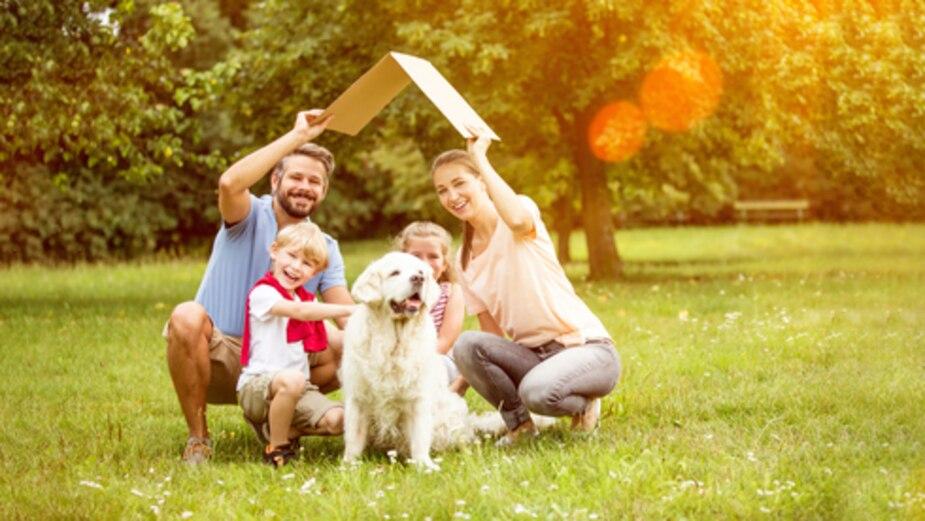 10 conseils pour déménager avec un animal