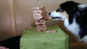 Image principale de l'article Vous serez fascinés par ce chien qui joue au Jenga