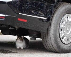 Le chat qui a fait stopper la limousine de Trump