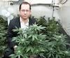 Marc-Boris St-Maurice, un «militant libéral actif», selon une biographie parue en2017, a passé une grande partie de sa carrière à faire la promotion de la marijuana.