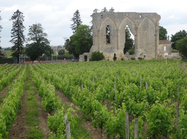 Un vignoble sur un site ancien, dans la région de Bordeaux, photographié lors d'une croisière fluviale.