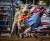 Dans l'Xtreme Bull fighting, le toréador doit demeurer le plus près possible du taureau tout en gardant la maîtrise pendant 70 secondes.