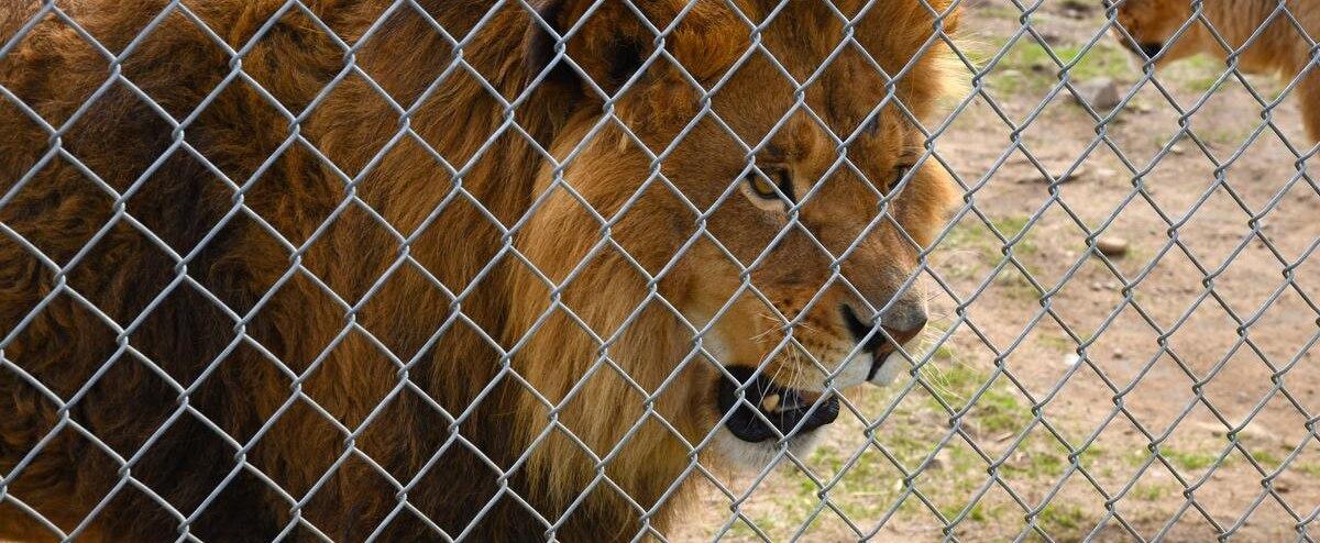 Une quinzaine d'animaux sont mort depuis la saisie