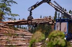 crise-forestière-québec-annonce-la-reprise-des-activités-de-coupe-sur-la-côte-nord
