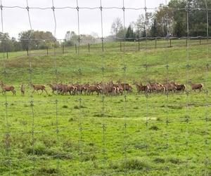 Le premier cas québécois dela maladie débilitante chronique des cervidés a été découvert dans cet élevage de Harpur Farms, à Grenville-sur-la-Rouge.