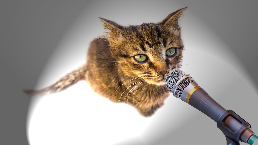 « Autotuned cat », la nouvelle star du web?
