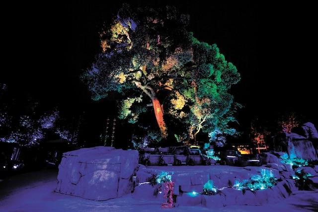 C'est dans un populaire parc à Hangzhou, en Chine, que Moment Factory a placé son installation Mystic Tree Show.