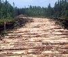 La Cour supérieure juge que le ministère des Forêts a failli à son devoir de consulter les Atikamekw avant d'autoriser la récolte de 200000m3 de bois sur leur territoire ancestral.
