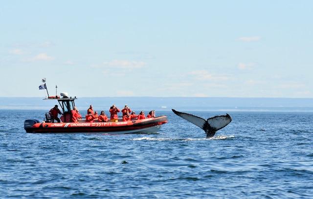 Observation de baleines.