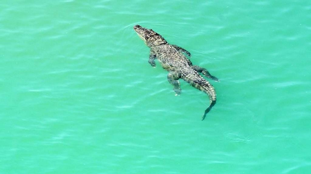 Un pêcheur se fait croquer le pénis par un crocodile et meurt de ses blessures