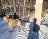 Max a été abandonné sur le bord d'une route, attaché à un poteau avec un écriteau disant: «À donner, chu un cave lol»
