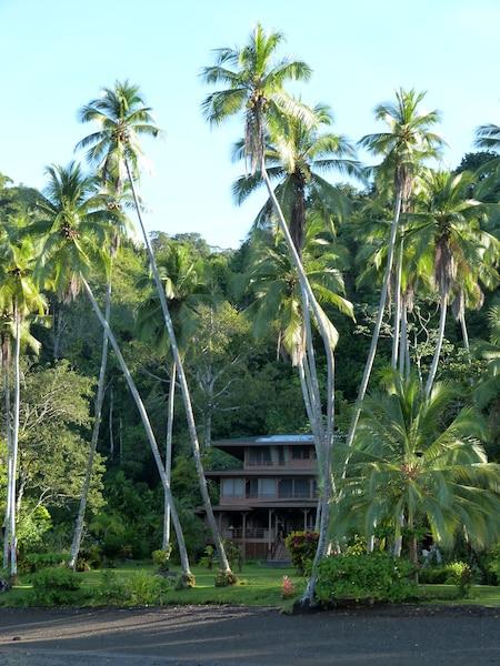 Le lodge de Playa Cativo, sur le littoral sud du Golfo Dulce. Les chambres sont au coeur d'un jardin tropical.
