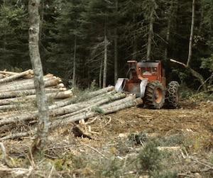 L'industrie forestière a perdu le tiers de ses emplois depuis 10 ans. Dans plusieurs municipalités des régions éloignées, il s'agit souvent de la plus importante industrie.
