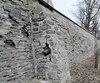 Plusieurs arbres matures ont été coupés pour réaliser la réfection du mur des Augustines qui fait partie d'un ensemble de bâtiments classés comme lieu patrimonial au Canada.