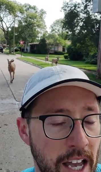 Trois cerfs curieux suivent un joggeur