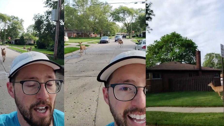Image principale de l'article Trois cerfs curieux suivent un joggeur