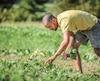 Maxime Monier, le propriétaire des Délices de Benjamin, une ferme maraîchère de l'île d'Orléans, va faire faillite et beaucoup de clients vont perdre leurs investissements.