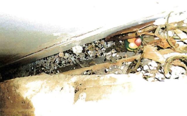 Amas d'excréments de souris et résidus alimentaires le long d'un mur.