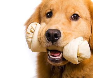 Bloc animaux, chiens