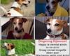 La famille de Happy a lancé un message sur Facebook pour retrouver leur animal en promettant une récompense.