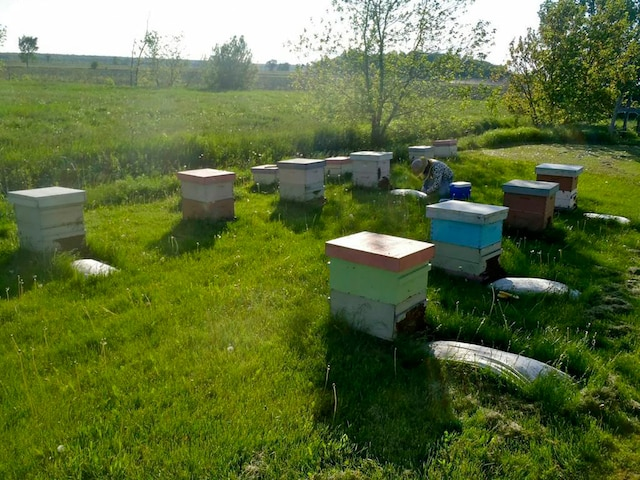 Les ruches étudiées en bordure des champs de maïs.
