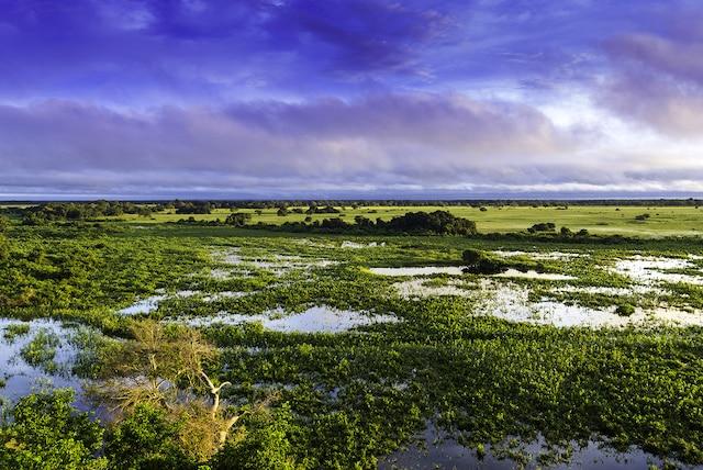 Les plaines inondées côtoient les zones agricoles, menaçant ainsi plusieurs espèces animales et florales.