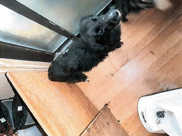 Les chiens souffraient pour la plupart de malnutrition et étaient gardés dans des conditions insalubres dans la résidence et la cour d'un couple de Rouyn-Noranda, en Abitibi-Témiscamingue