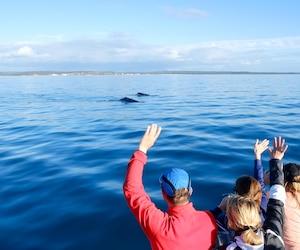 6 randonnées pour observer les baleines