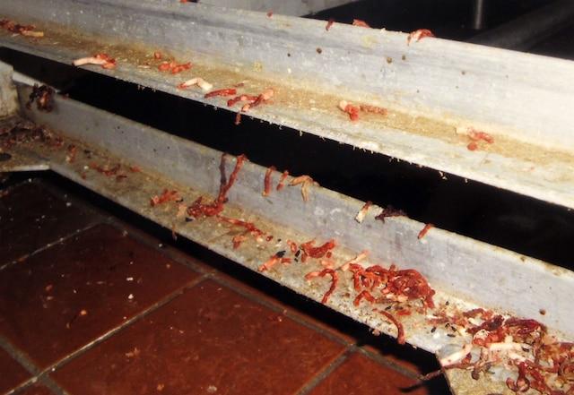 Une étagère mobile pour le transport de la viande était pleine de bœuf haché cru et d'excréments de souris.