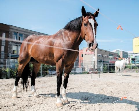 Fiecare cal iese de aproximativ o oră pe zi.