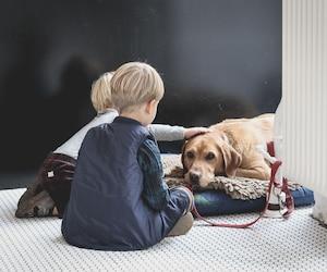 10 façons d'apporter la fraicheur à votre animal