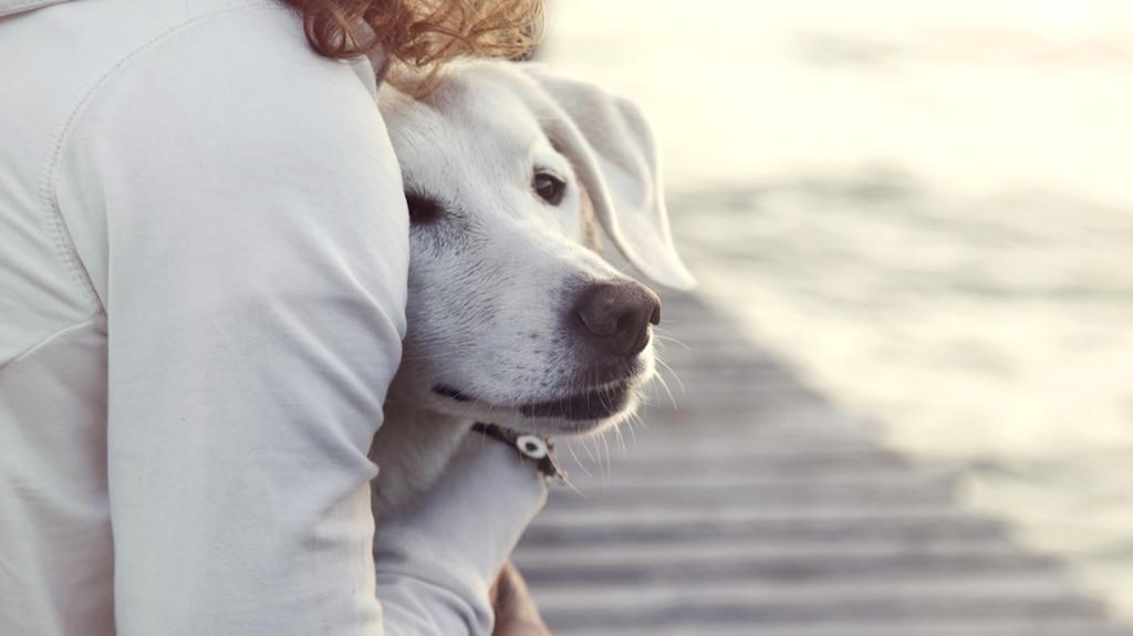Aider votre chien à vaincre sa peur