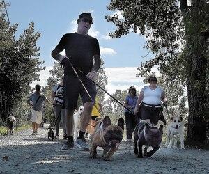 La Société protectrice des animaux de Québec tenait, dimanche, sa quatrième marche canine afin d'amasser des fonds. L'organisme connaît d'importantes difficultés financières depuis qu'il a abandonné la gestion animalière sur le territoire de la Ville il y a trois ans.