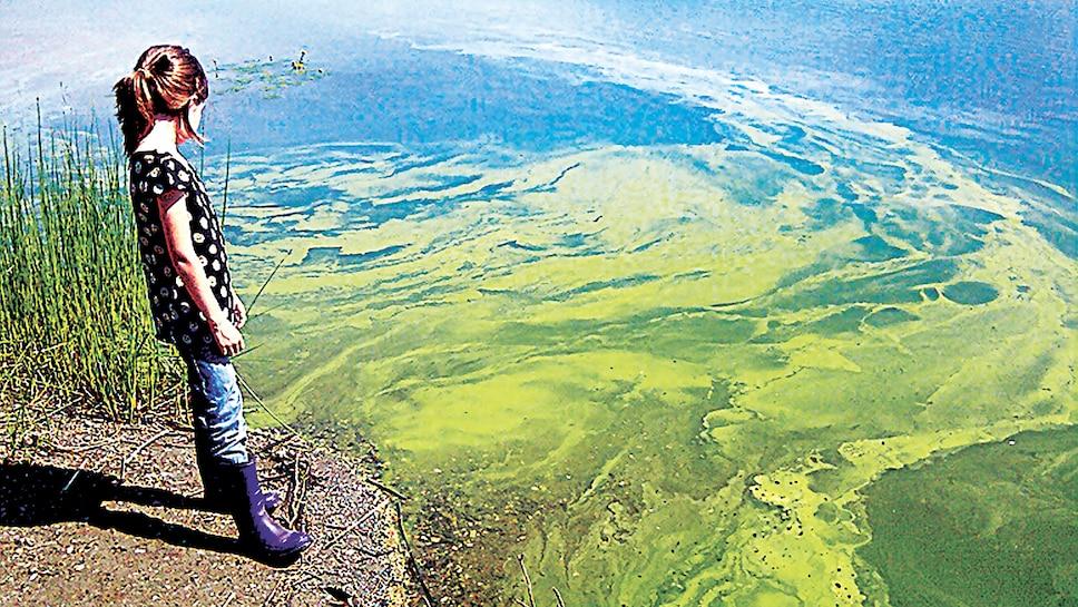 Des dizaines de lacs agonisent au Québec, alors que les riverains luttent pour assurer leur survie.