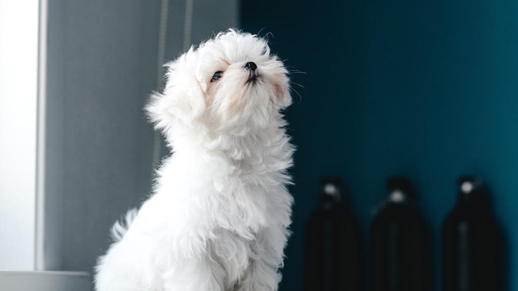 10 chiens parfaits en appartement