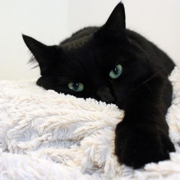12 trucs efficaces pour emp cher votre chat d 39 uriner en dehors de sa liti re jdm - Comment empecher un chat d uriner partout ...
