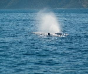 des consultations sur les baleines qui font sourciller jdm. Black Bedroom Furniture Sets. Home Design Ideas