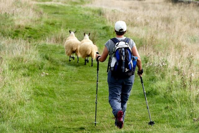 On randonne à travers champs avec les animaux.