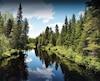 Cette portion de forêt à Notre-Dame-de-la-Merci, dans Lanaudière, a été léguée par la famille Jeanson à la Fiducie de conservation des écosystèmes de Lanaudière. Elle deviendra un sanctuaire pour oiseaux, tels que la grive des bois