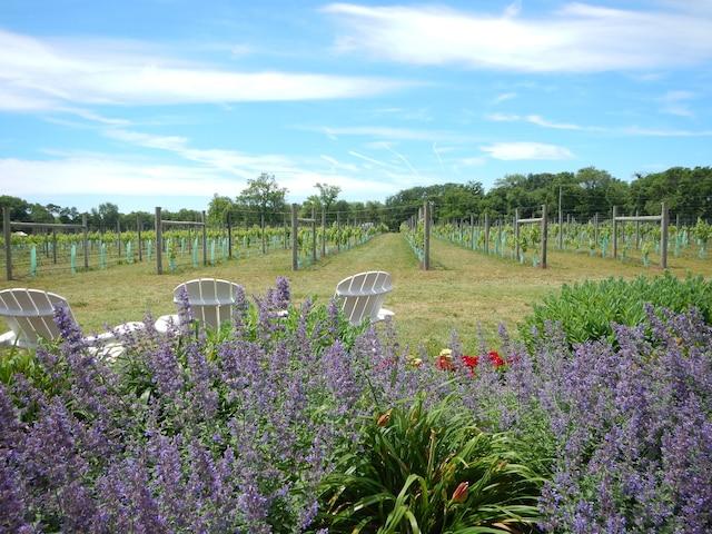 La péninsule de Cape May a vu fleurir des vignobles et les micro-brasseries ces dernières années.