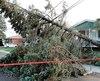 Un arbre est tombé sur les fils lors des vents violents le 1er novembre à Saint-Hyacinthe. Hydro-Québec estime que le rétablissement du service a coûté 20 millions $.