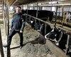 Vincent Roy devant une partie du troupeau de sa ferme laitière, à Saint-Joseph-de-Beauce, hier.
