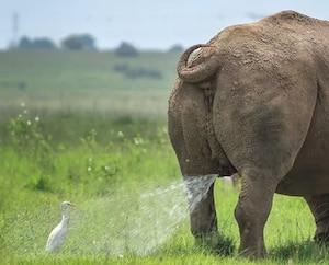 Voici les animaux les plus drôles de l'année